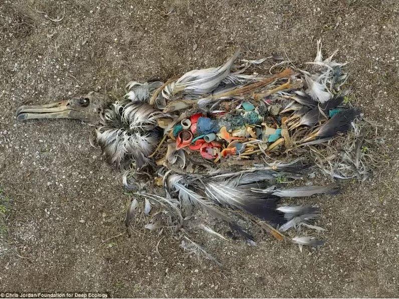 Mrtvý albatros